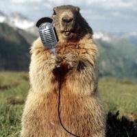 Radio Marmota