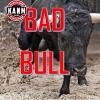 Bad Bull Radio