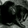 """""""Humans With Lion's Heart"""""""
