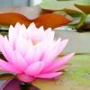Intuizione, ascolto interiore, guida e ispirazioni divine