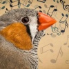 Songs Of The Birds