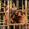 WWE BattleGround Recap - Its a New Day