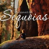 Spring in California's Sequoia Country