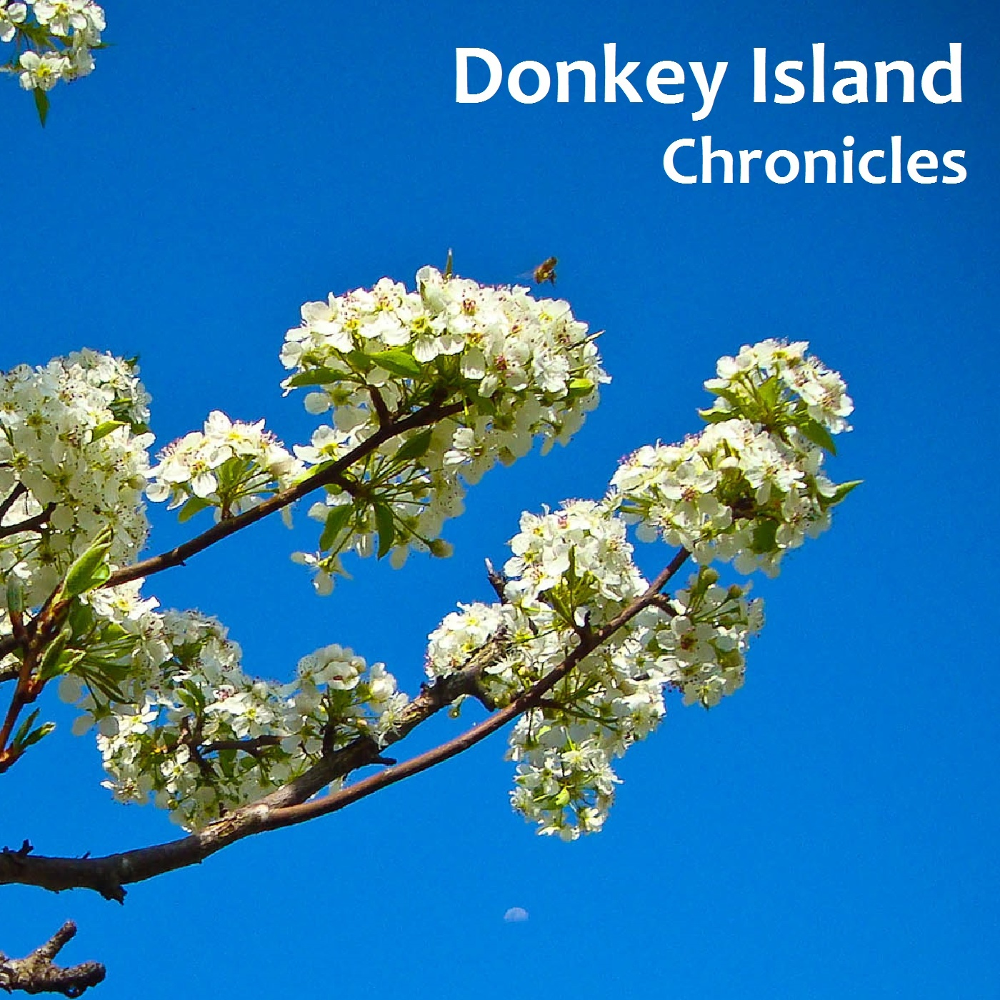 Donkey Island Chronicles