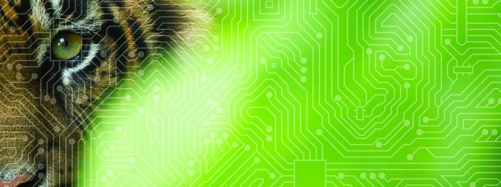 Wired Minds - immagine di copertina
