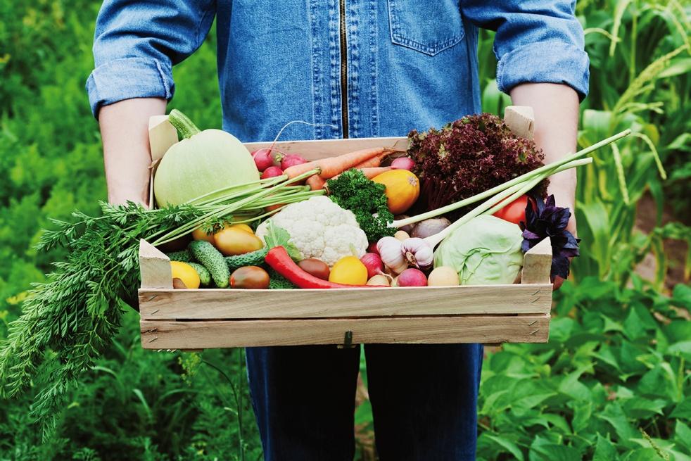 Radio légumes & compagnie - Cover Image
