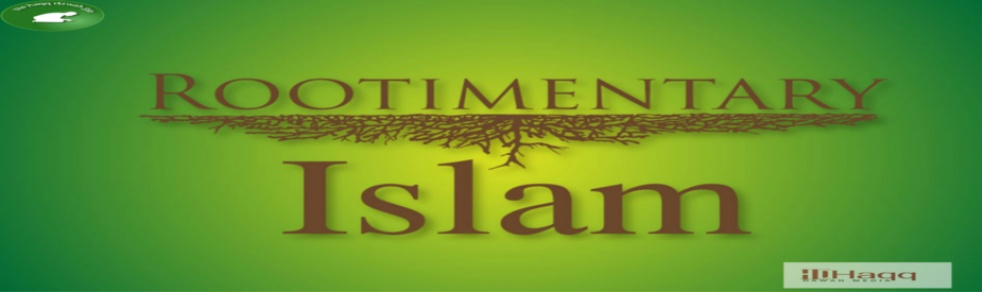 Rootimentry Islam - show cover