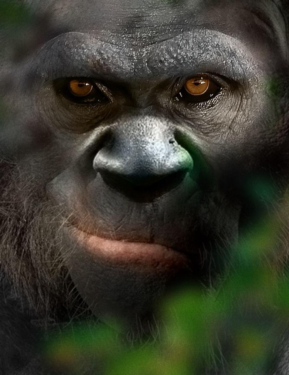British Bigfoot/Dogman - imagen de show de portada