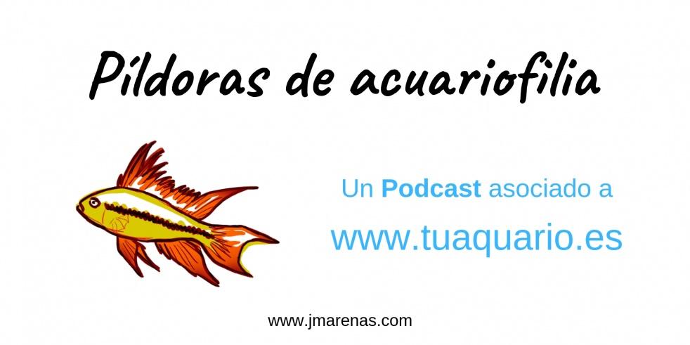 Píldoras de acuariofilia - show cover