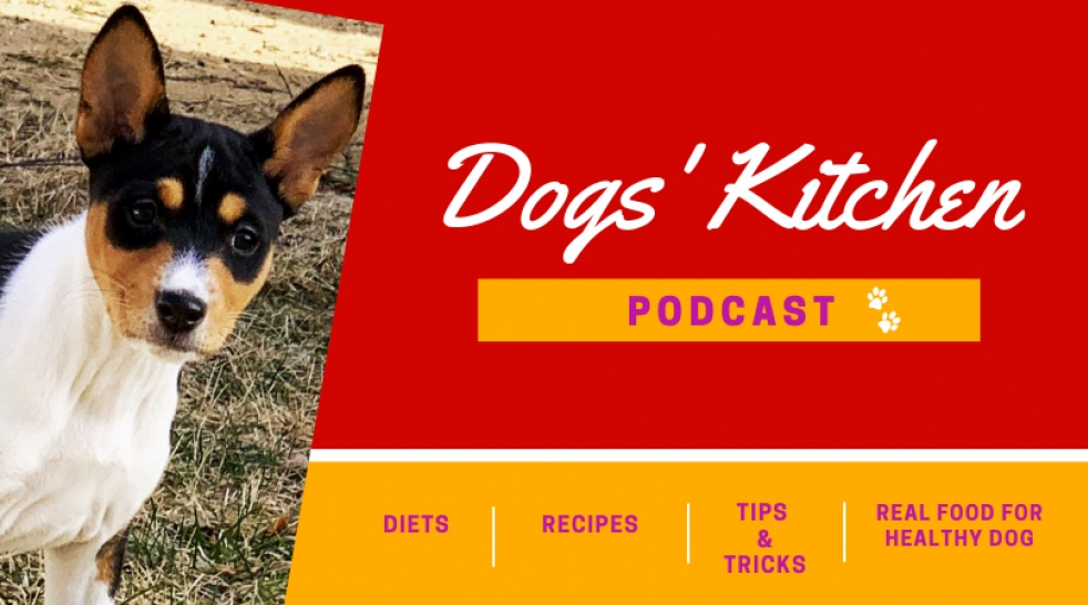 Dogs' Kitchen - show cover