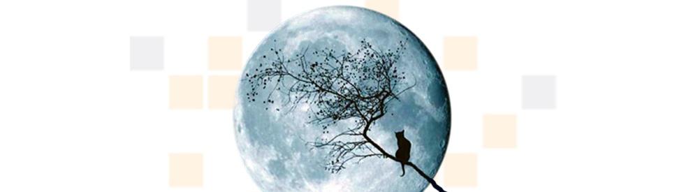 Colección Nocturna - show cover