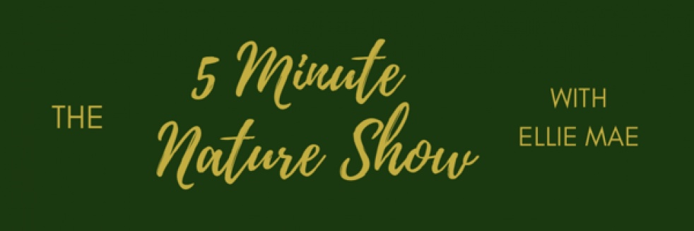 5 Minute Nature Show - show cover