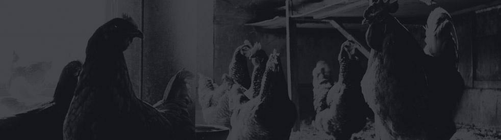 Il Pollaio - immagine di copertina dello show