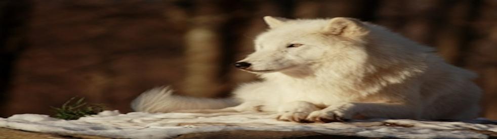 Wolf Song Compilation CD - immagine di copertina