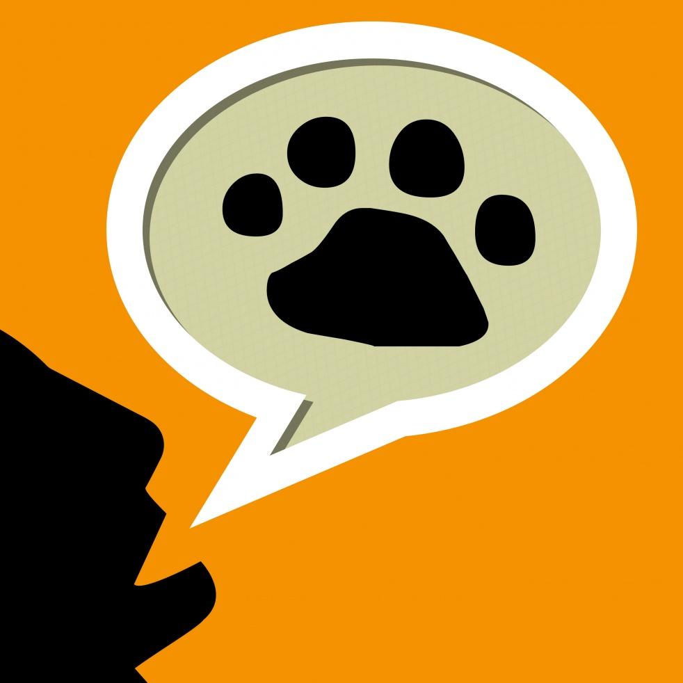 Sobre perros y gatos - show cover