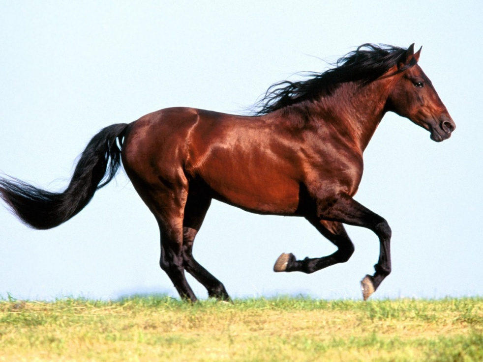 Horse Sense: Making Sense Out of Horses - immagine di copertina