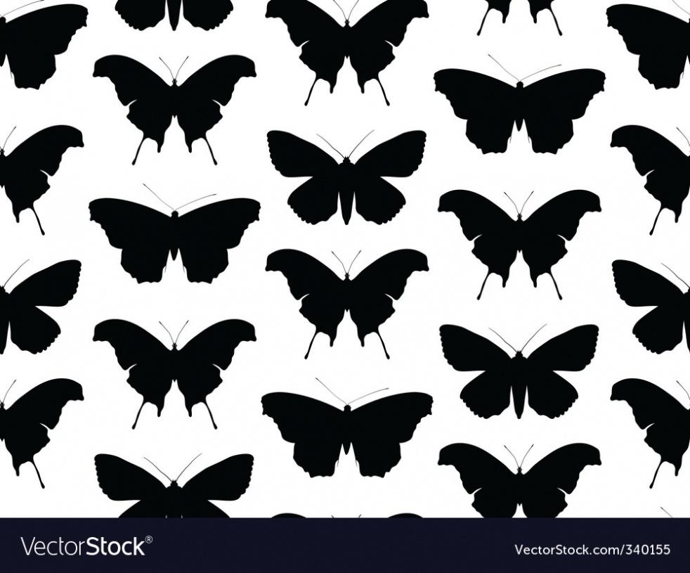 Black Butterfly in Effect - immagine di copertina