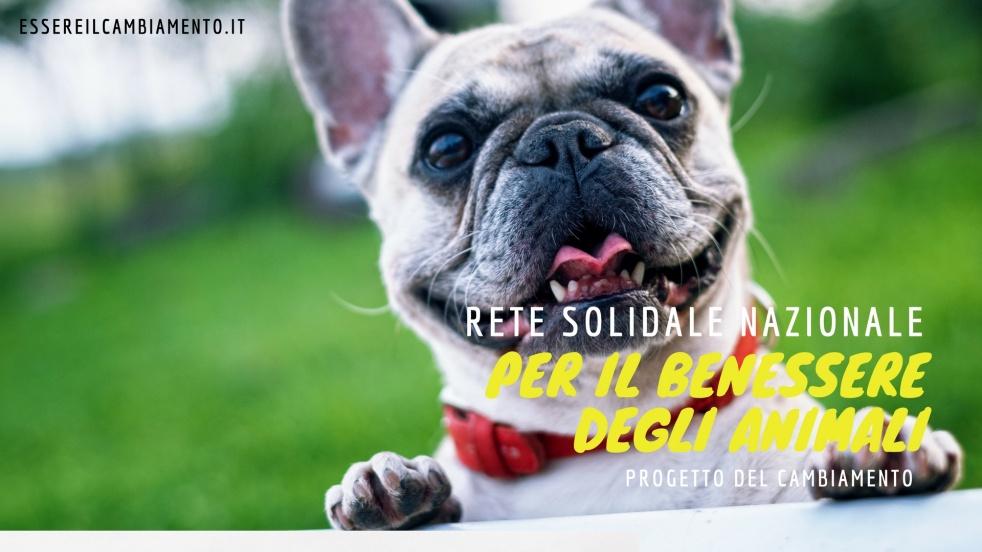 Rete Solidale Nazionale - Cover Image