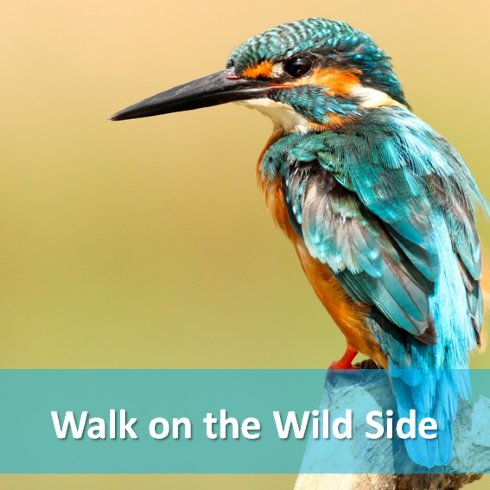 Walk on the Wildside - immagine di copertina dello show
