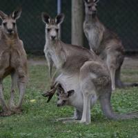 Australia through an expat lens