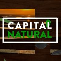 BandNews Capital Natural