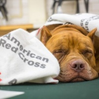 Podcaster's Unite! – American Red Cross Fundraiser – Blazing Caribou Studios