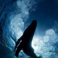 Buongiorno in connessione con le balene! 🐋 💕✨