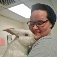 Rabbit, Saved From Brockton Streets, Looking For Home