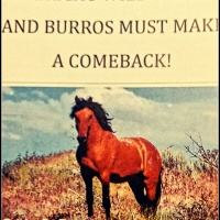 America's Wild Horse's And Burros Must Make A Comeback