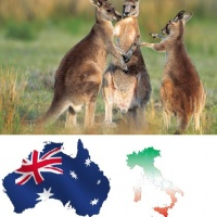 Dall'Australia con furore bodyslammando kangaroos #1