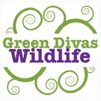 Green Divas Heart Wildlife
