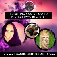Why You Shouldn't Scruff Cats And How To Protect Your Pet's Paws In Winter