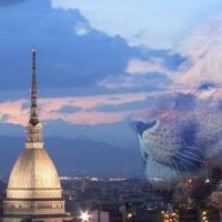 Torino Oggi - Episodio 102 - Hour of Prayer