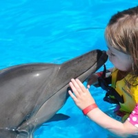 The Great Day of Love and Gratitude 2017 - The Message of the Dolphins