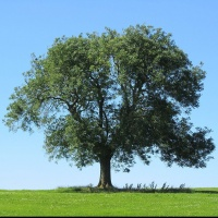 Say Goodbye to Our Friends-Ash Tree Removal Project