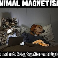 Cats living with Dogs