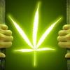 Medical Marijuana Radio - 10/03/17