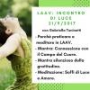 Incontro di Luce: Meditazione LAAV 21 settembre 2017