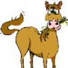 """""""Horse Stuff"""""""
