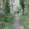 No Camiño ( Canción Propia)