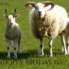 78_Hounded by sheep (hoppy birtday IV)