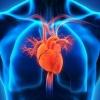 El corazón tiene cerebro
