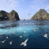 The Commodification of Dokdo Island: Nationalism in the Marketplace