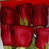 Seis rosas