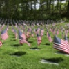 Flags For The Fallen At Massachusetts National Cemetery