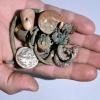 Segmento Semanal de Arqueología Bíblica